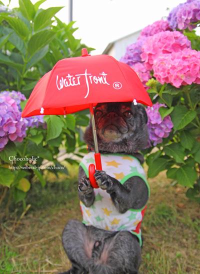 傘を持つトリック