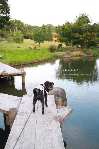 於大公園 池