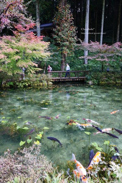 モネの池 岐阜