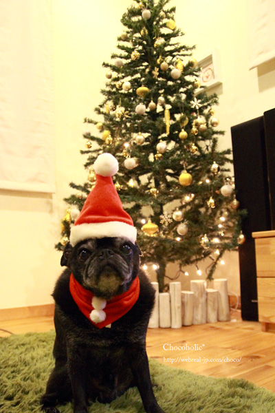 クリスマスツリーとパグサンタ