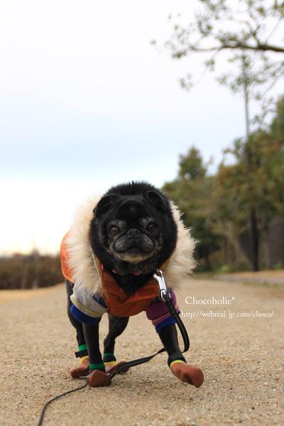 犬用靴下 パグ