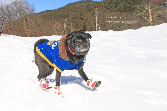 犬用靴 雪遊び