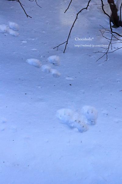 熊の足跡? 雪