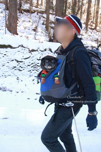 犬用抱っこバッグ 登山
