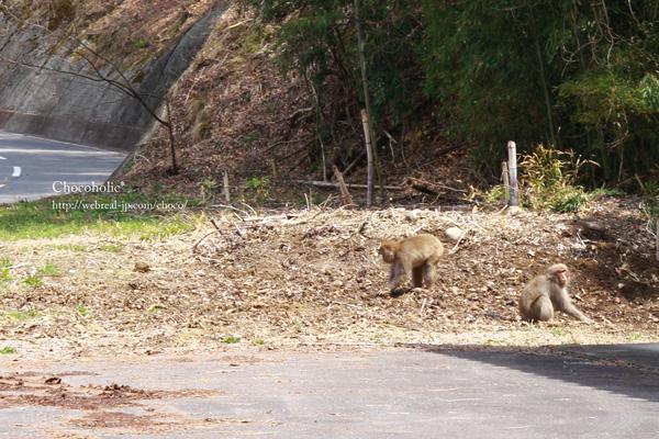 野生の猿 松川町