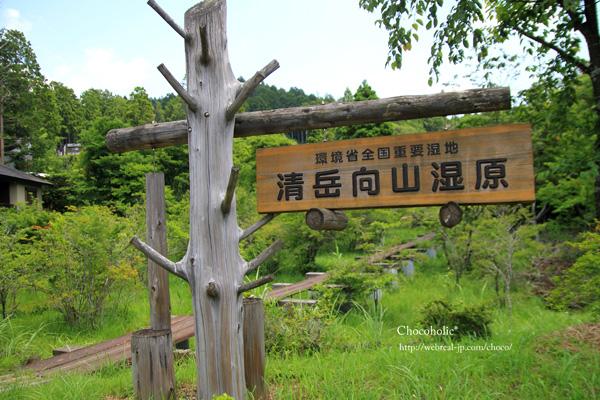 清岳向山湿原