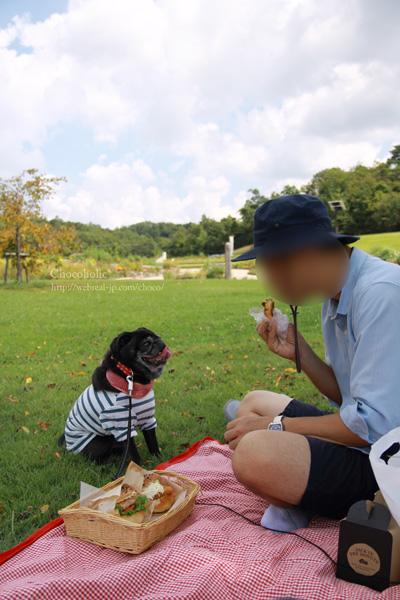ピクニック モリコロパーク