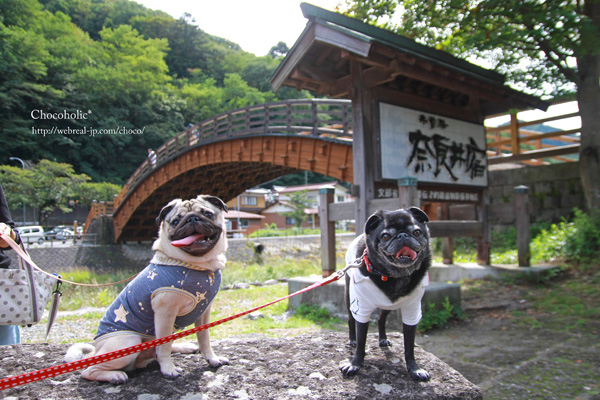 奈良井宿 ペット 大橋