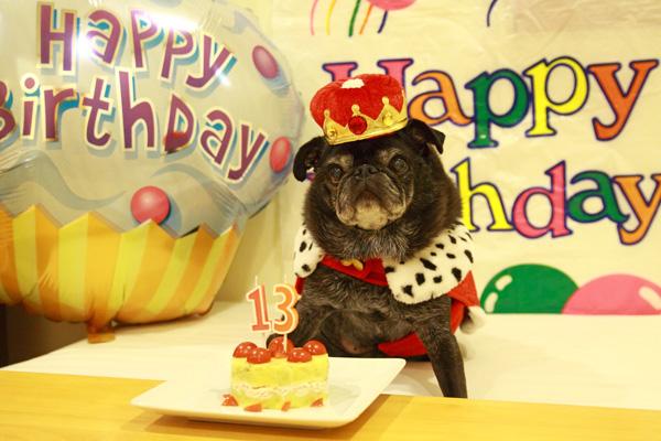 チョコ13歳誕生日