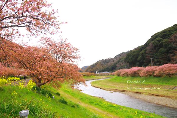 みなみ桜と菜の花まつり