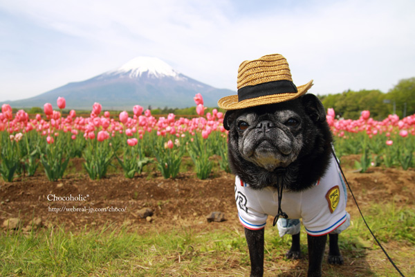 山中湖 花の都公園 富士山