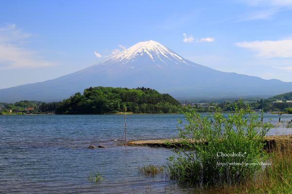 河口湖 富士山 大石公園