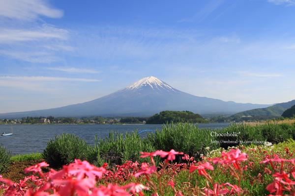 大石公園 芝桜と富士山