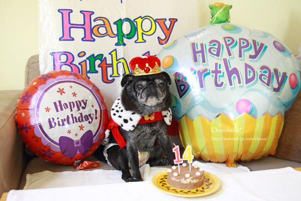 14歳誕生日 シニア犬