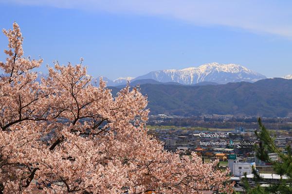 春日公園 仙丈ヶ岳 桜